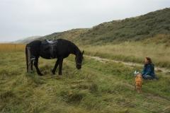 tocht-paarden-Terschelling-1