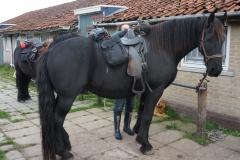 tocht-paarden-Terschelling-15