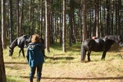 tocht-paarden-Terschelling-16