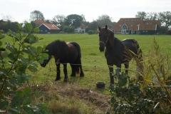 tocht-paarden-Terschelling-17