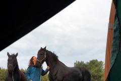 tocht-paarden-Terschelling-19