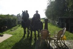 tocht-paarden-Terschelling-5