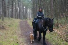 tocht-paarden-Terschelling-7