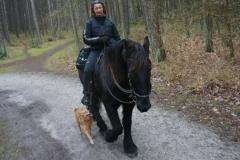 tocht-paarden-Terschelling-8