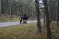 tocht-paarden-Terschelling-9